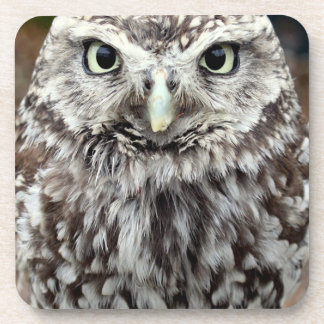 Young Barred Owl Coaster