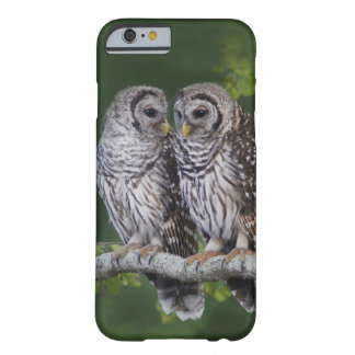 Young Barred Owl Siblings - (Strix varia) Barely There iPhone 6 Case