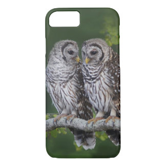 Young Barred Owl Siblings - (Strix varia) iPhone 8/7 Case