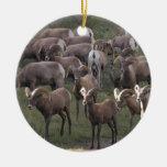 Young Bighorn Sheep Christmas Ornaments