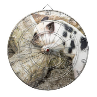 Young black and white piglet at tree trunk dart board