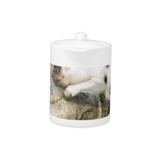 Young black and white piglet at tree trunk teapot