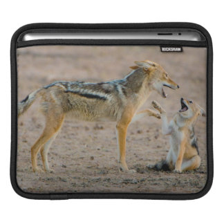 Young Black Backed Jackal (Canis Mesomelas) Pup iPad Sleeve
