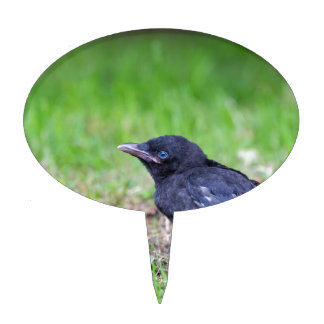 Young black crow sitting in green grass cake topper