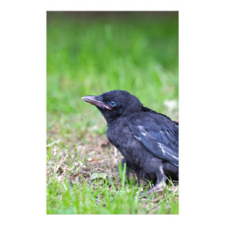 Young black crow sitting in green grass stationery