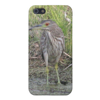 Young Black-crowned Night-Heron iPhone 4/4s Speck iPhone SE/5/5s Cover
