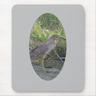 Young Black-crowned Night-heron Mousepad