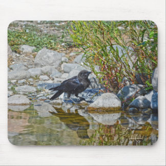 Young Black Raven Reflected in Pool Mouse Pad