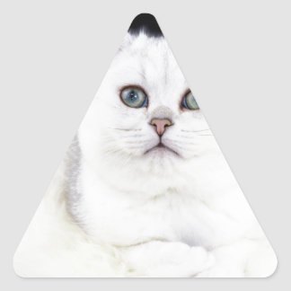 Young black silver shaded cat lying on white fur triangle sticker