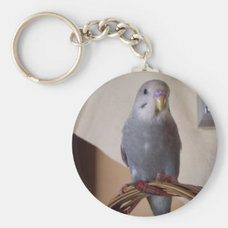 young blue budgie keychain