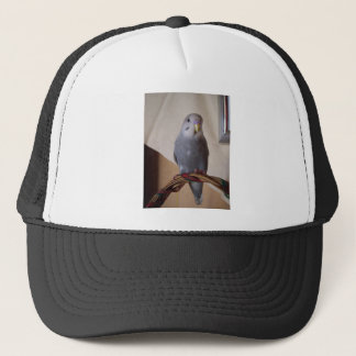 young blue budgie trucker hat