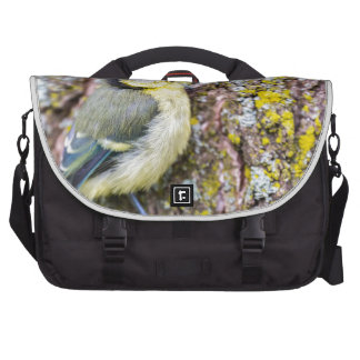 Young blue tit sits on oak tree trunk laptop messenger bag