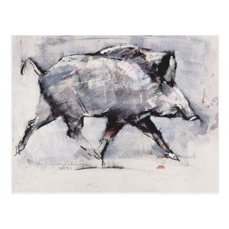 Young boar Bialowieza Poland Postcard