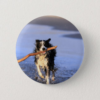 Young border collie dog fetching stick on beach button