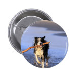 Young border collie dog fetching stick on beach pin