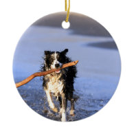 Young border collie dog fetching stick on beach christmas ornaments