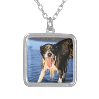 Young border collie dog on beach silver plated necklace