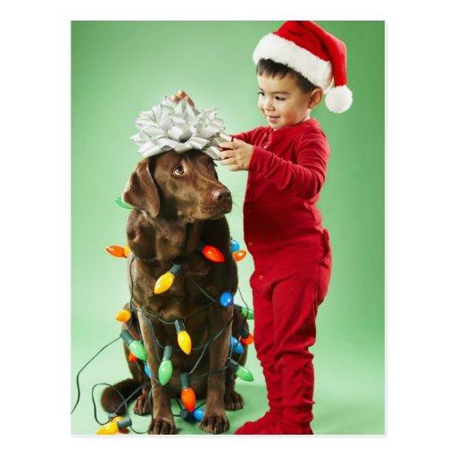 Young boy wrapping Christmas lights around a dog Post Card