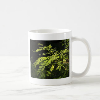 Young branches of the acacia tree classic white coffee mug