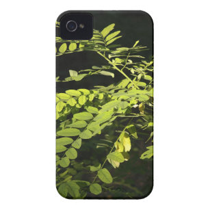 Young branches of the acacia tree iPhone 4 Case-Mate case