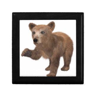 Young Brown Bear Keepsake Box