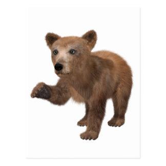 Young Brown Bear Postcard