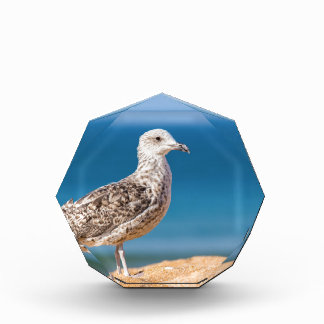 Young brown seagull on beach with sea.JPG Award
