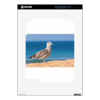 Young brown seagull on beach with sea.JPG Decal For iPad 2
