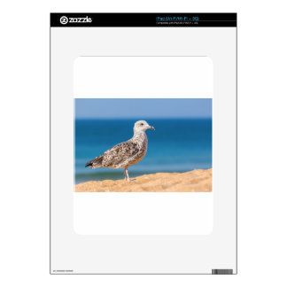 Young brown seagull on beach with sea.JPG Decals For iPad