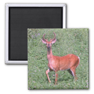 Young Buck 2 Inch Square Magnet