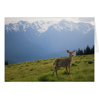 Young Buck and Mt. Olympus Peaks Card