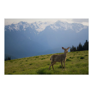 Young Buck and Mt. Olympus Peaks Print