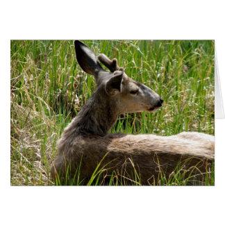 Young Buck Deer Greeting Card
