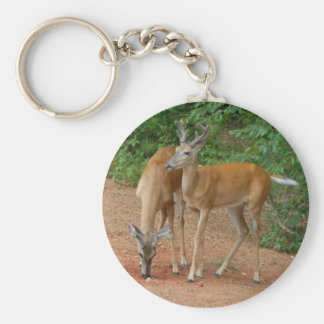 young buck deer in the wild basic round button keychain