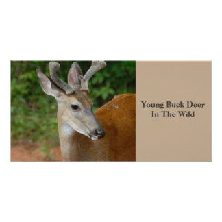 Young Buck Deer photocard Card