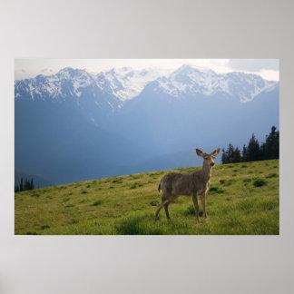 Young Buck e impresión de los picos del monte Olim