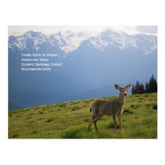 Young Buck en postal de la primavera