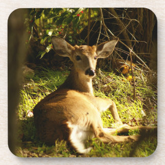 Young Buck In The Meadow Beverage Coaster