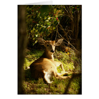 Young Buck In The Meadow Card