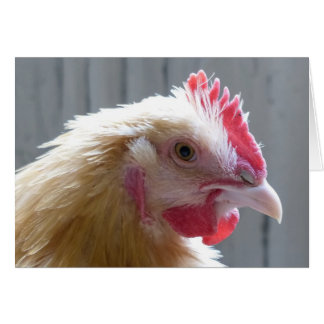 Young Buff Orpington Heritage Chicken Roo Card
