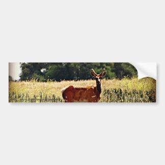 Young Bull Elk Car Bumper Sticker
