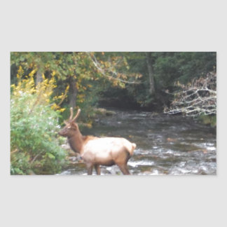 Young Bull  Elk in Velvet Antlers, Crossing Creek Rectangle Stickers