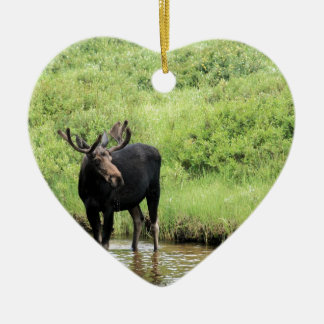Young bull moose drinking water in a stream. ceramic ornament