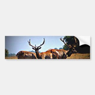 """""""Young Bulls"""" - Elk Car Bumper Sticker"""
