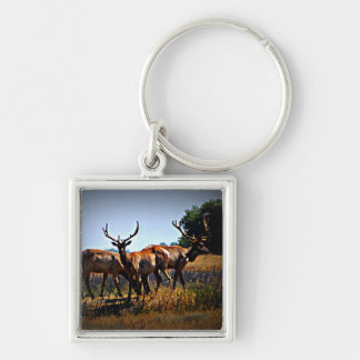 """Young Bulls"" - Elk Keychain"