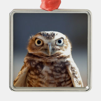 Young Burrowing Owl Metal Ornament