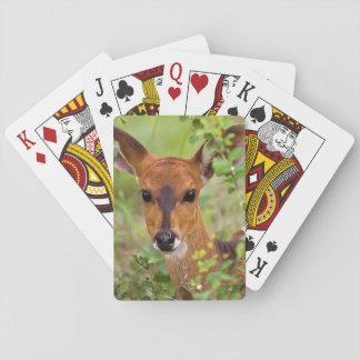 Young Bushbuck Ewe, Kruger National Park Poker Cards