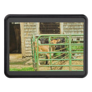 Young Calf In Fence Pen Near Barn Trailer Hitch Cover
