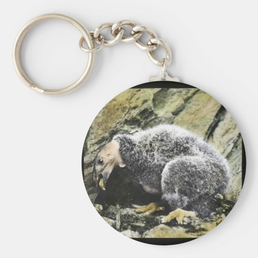 Young California condor Basic Round Button Keychain