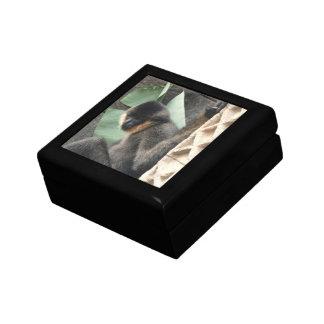 Young Capuchin Monkey Trinket Box
